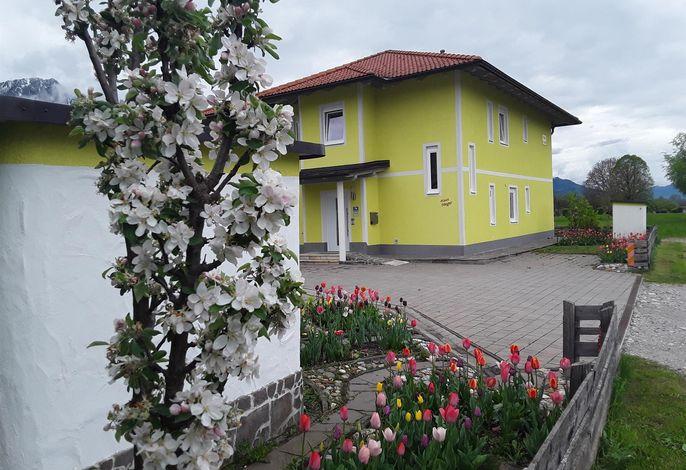 Apartments Steger