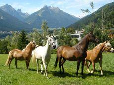 Kassnhof - Reit und Ponybauernhof