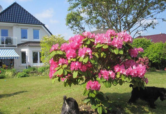 Landhaus am See Whg. 1