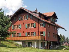 Alpenveilchen 2 Adelboden