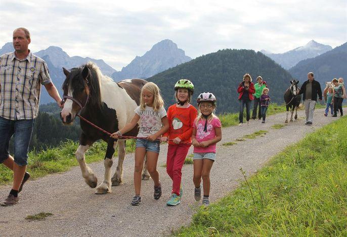 Pferde- und Schafhof Klinser