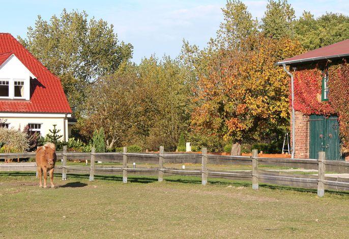 Ferienhof am Leuchtturm - Anlage mit Meerblick bis 26 Personen
