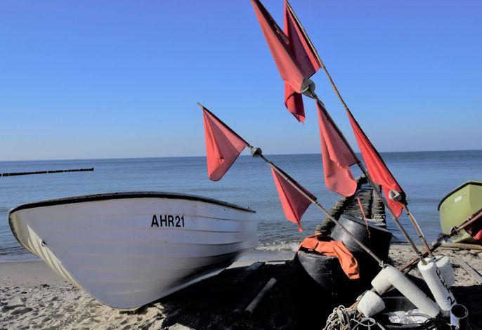 Der Windflüchter am Meer