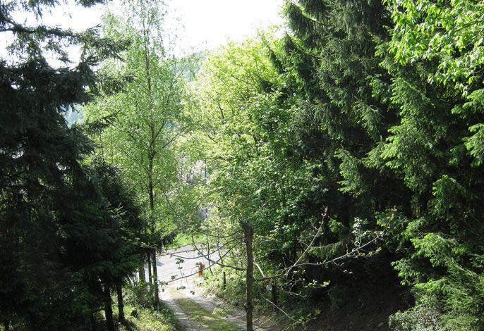 Eifel Natur III