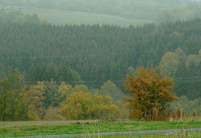 Waldferienpark Gerolstein 2