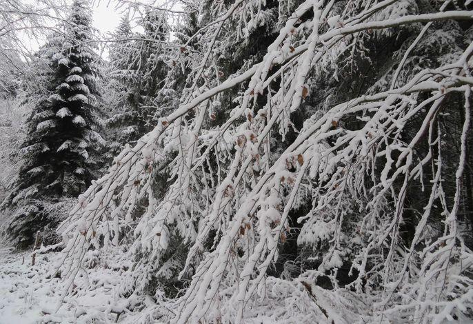 Taubergießen im Winter