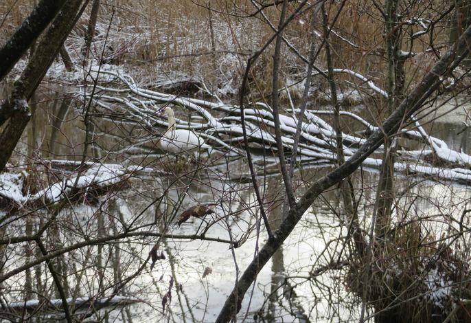 Winter im Taubergießen