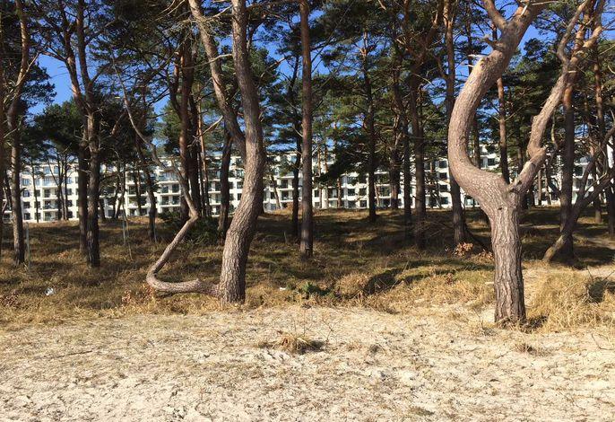 Strandresidenz Appartement Meeresrausch AR11 in Prora