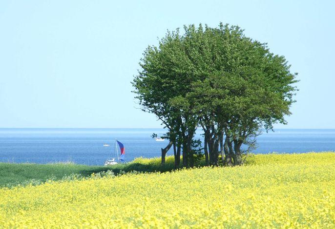 Ferienwohnung Sonneneck 3 - Sorgenfrei buchen