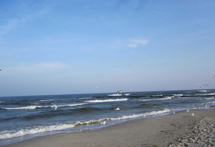 Zempin Ostseepark WE 37  **Insel Usedom**150m zum Strand**