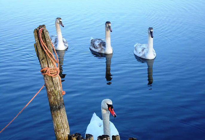 FeWo im Ostseebad - inkl. Boot - nur 50m zum Wasser