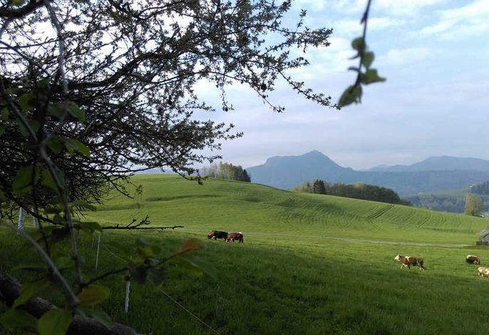 Bio Bauernhof Mondsee Familie Schafleitner-Kroiß
