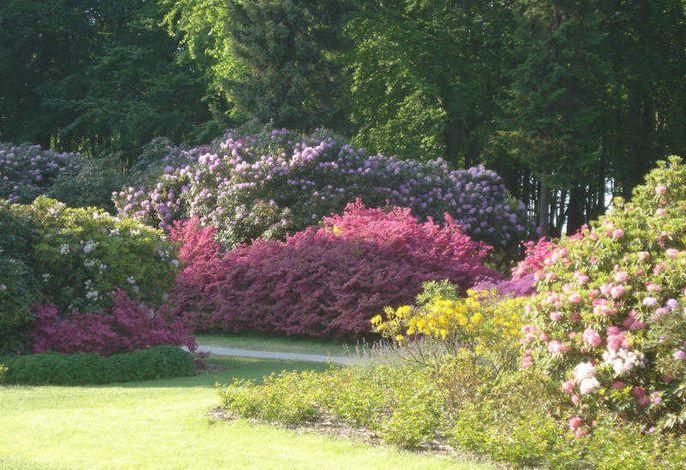 Ostseeidyll - Komfort Fewo nahe dem Rhododendronpark