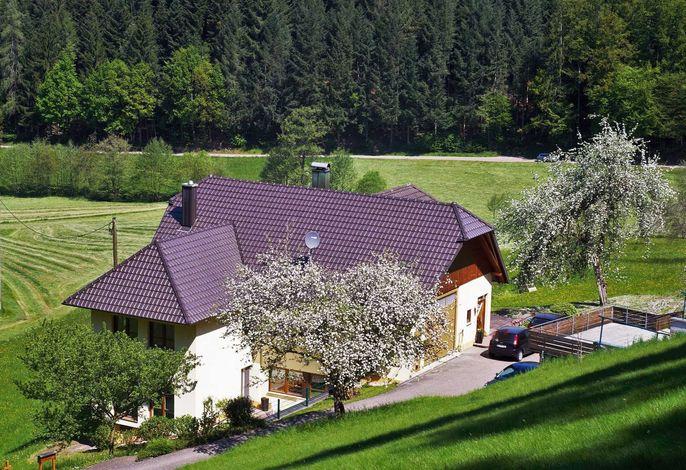Blick von Waldrand mit Prinschbachtal im Hintergrund