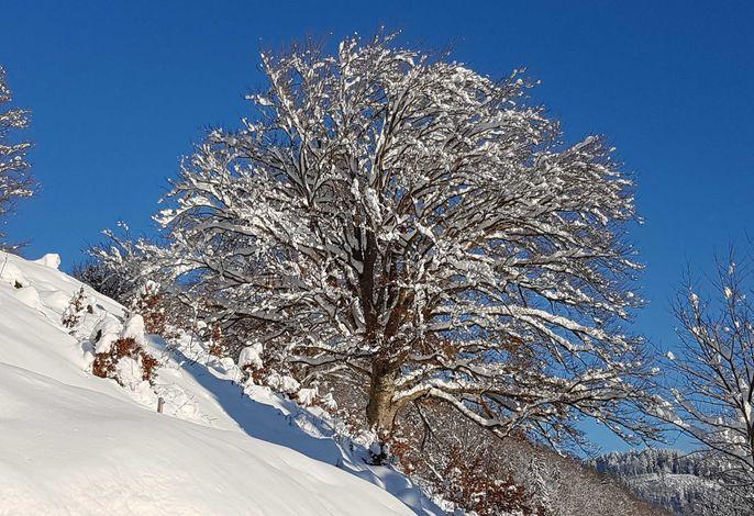 Blick auf die Weidebuche vor dem Haus im Winter