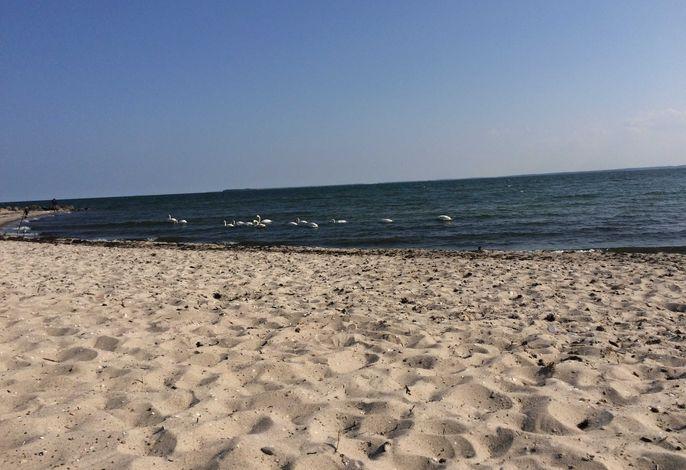 Ferienwohnungen Urlaub mit Hunden Maxi Villa Waldblick
