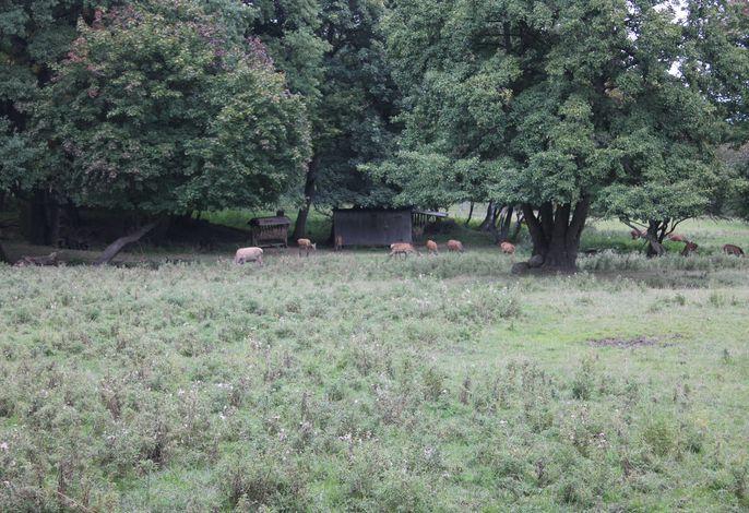 Bungalow am Wald