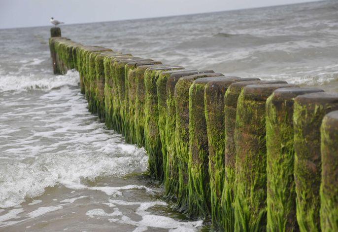 Urlaubsresidenz Meeressehnsucht - Wohnung -Genua-