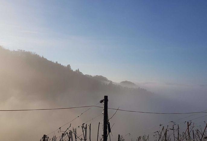 Ferienwohnung in Sasbachwalden
