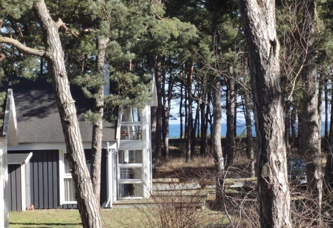 Ostsee Strandhaus Seerobbe